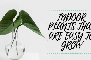 Indoor Plants That Are Easy To Grow