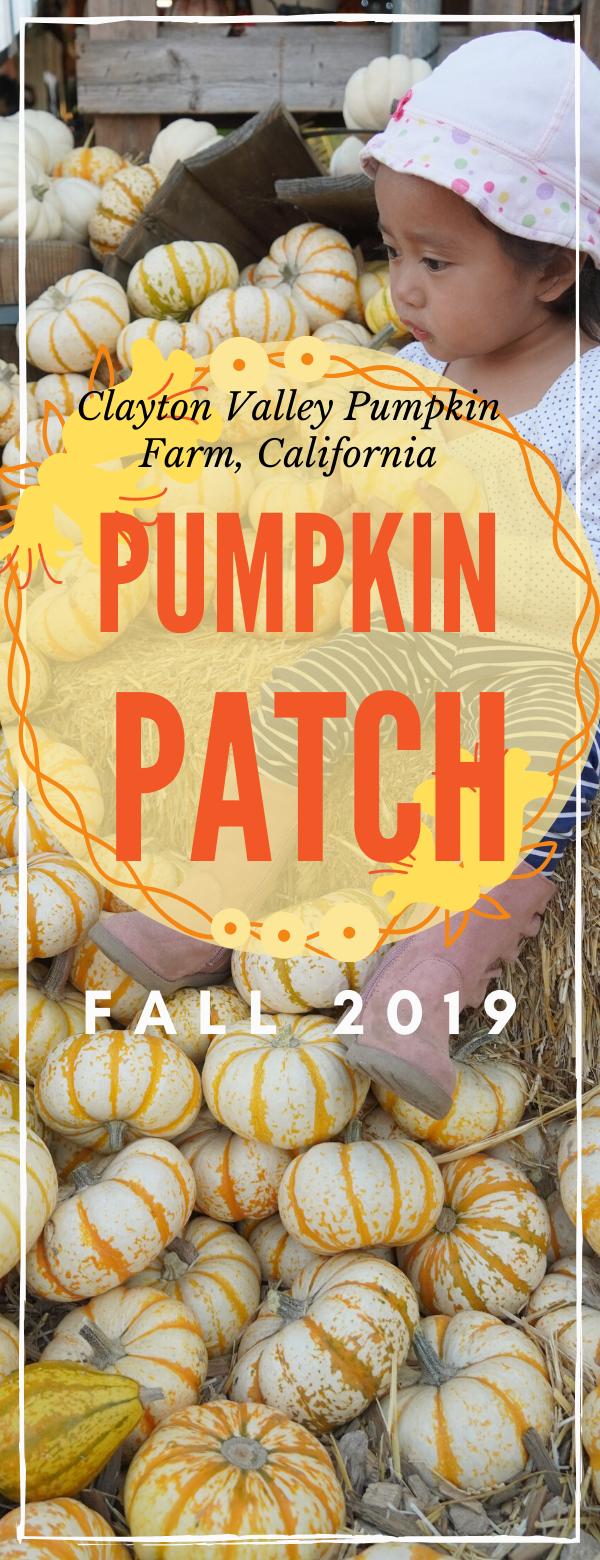 Clayton Valley Pumpkin Farm Patch