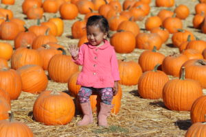 pumpkin patch at larry's produce